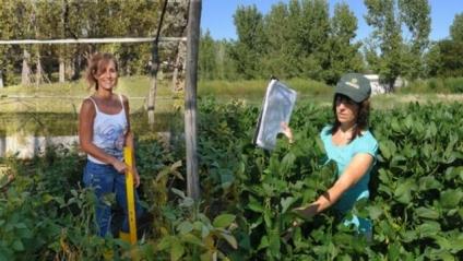 Investigadoras de Villa Mercedes desarrollaron una nueva variedad de soja