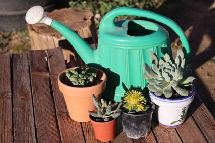 ¿Es época de fertilizar nuestras plantas?