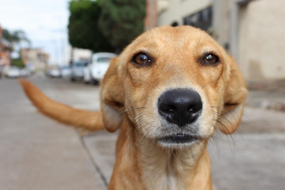 Día Internacional del Perro Callejero: ¿cómo nace este día?