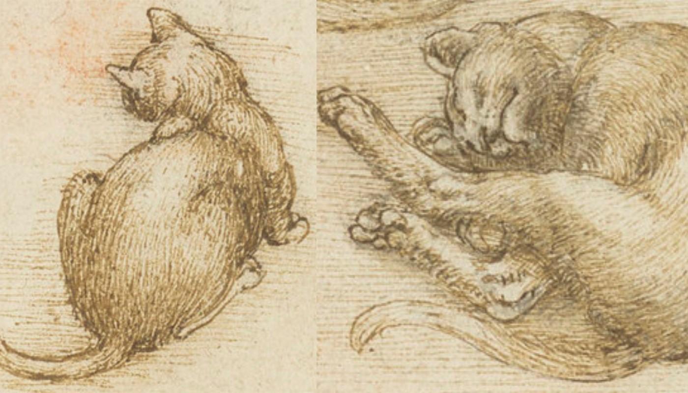 Dos de los gatitos que he dibujado durante mi estancia aquí.